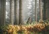 Into the deep forest (explore) (desomnis) Tags: forest woodland wood woods canonef135mmf2l canon135mm canonef135mmf2 135mm canoneos6d canon6d desomnis nature trees fog mist misty foggymood foggyatmosphere haze mühlviertel upperaustria austria österreich oberösterreich bohemianforest böhmerwald