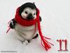 December (alegras dolls) Tags: penguin toy advent winter snow