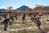 Vignes et Pic Saint Loup au lever de soleil (calimelolo) Tags: valflaunès végétaux picsaintloup leverdesoleil lieux filtres vignes