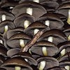 Together (De Rode Olifant) Tags: marjansmeijsters nature mushroom fungus autumn