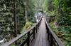 "Maltatal A    ""am Gossfalle"" (Lucchese Fabrizio) Tags: carinzia kärnten austria österreich gosfalle maltatal ponte brucke bridge bosco gösbach gösfälle foresta alberi"