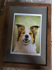 Maxi painting (Lynn Adams Illustration) Tags: border collie painting portrait digital art drawing dog puppy