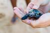 Filhote Tartaruga | Projeto Tamar | Praia do Forte | Bahia | Brasil (Leandro Rinco) Tags: brazil brasil praiadoforte bahia beach praia mar ocean sol tartaruga projetotamar sun turtle