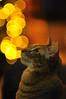 Interested... (FotoGraf-Zahl) Tags: bok bokeh smalldepthoffield smalldof dof cat tomcat lights christmas xmas dreamy katze kater weihnachten geringetiefenschärfe geringe schärfentiefe tiefenschärfe kleineschärfentiefe lichter gato