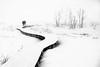 S | C U R V E (frank-heinen-photographer) Tags: schnee landscape stimmung ©wwwfrankheinenphotographerde frilufts hochmoor eifel outdoor kalt cold hohesvenn frozen hautesfagnes fujifilmxt2 moor tree travel landschaft winter mood eis xf1655mmf28rlmwr highfens outdoorlife snow ice ngc