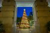 Framing the Christmas Tree (BP Chua) Tags: christmas xmas christmastree singapore thefullerton hotel bluehour night colours fujifilm fujifilmxt1 xt1 wideangle frame framing comosition