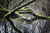 2017_12_30-H17_24_22-N°8924-1 (HelpyLP) Tags: water eau monster monstre swamp marais nature reflet reflection combat fighting