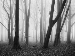 Dark Days (Damian_Ward) Tags: ©damianward damianward beech trees chilterns chilternhills thechilterns fog mist buckinghamshire wood forest woodland