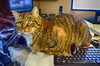 Junior (brooksbos) Tags: brooks brooksbos feline sony rx100 companion