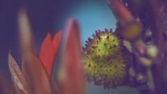 Eldrazi Plant 👾 (Vincent Monsonego) Tags: sony α αlpha alpha ilce7rm2 a7rii a7r2 zeiss sonnar t fe 55mm f18 za sel55f18z prime lens alien plant flower eldrazi macro kenko extension tube mtg