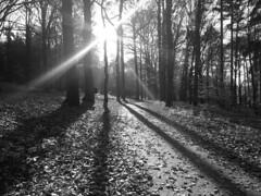 Veluwezoom, sun (paulusdegroot) Tags: veluwezoom veluwe nature natuur rozendaal velp sun shadow schaduw zonnestralen