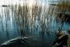 AY6A5641 (fcruse) Tags: cruse crusefoto 2018 vinter canon5dmarkiv natur landscape nature vågor vatten water longexposure stockholm sweden se