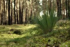 Happy New Year 2018 (pszcz9) Tags: przyroda nature natura las forest forestimages pejzaż landscape trawa grass jesień autumn fall beautifulearth sony a77 poland