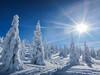 1/365 (sstewy) Tags: snowmobiling winter priestlake snow 365