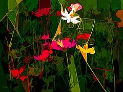 floral surreal (larrynunziato) Tags: floral floraldigital mixedmedia digitalpainting surrealism experimental colorful