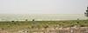 Blown away. (misty1925) Tags: emu kincheganationalpark lake lakecawndilla newsouthwales menindee
