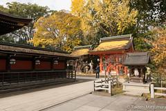 Kitano Tenmangu (takashi_matsumura) Tags: kitamo tenmangu 北野天満宮 kamigyoku kyoto japan ngc nikon d5300 autumn fall leaf color sigma 1750mm f28 ex dc os hsm