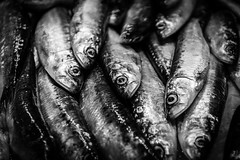 Anchovies (King Grecko) Tags: bw foodanddrink anchovies anchovy blackandwhite fish food freshfish gastronomy ingredients mallorca meditteranean raw sardines sea spain