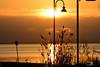 A-LUR_3334 (OrNeSsInA) Tags: lagotrasimeno lago aironi byrd