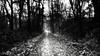 go straight (FotoTrenz NRW) Tags: forest way trail straight dark white winter december blackwhite bw monochrome nature outdoor snow cold wald natur weg geradeaus angietrenz trenzfotonrw