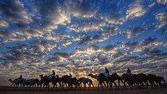 The Dawn Patrol (Sanjiban2011) Tags: aldafra uae camels animal fauna sky skyscape skyline outdoor clouds cloudscape cloudy nature landscape dawn earlymorning sunrise sunrays touristattraction travel nikon d750 tamron tamron1530 fullframe wideangle colours