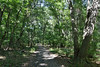 When the Weather Was Warmer (Eddie C3) Tags: urbanparks nycparks pelhambaypark forestpaths hunterislandmarinesanctuary hunterisland bronxnewyork