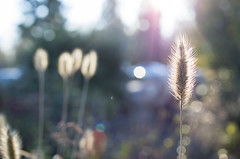 Daybreak (s.d.sea) Tags: pentax k5iis macro fall winter frost chilly lwtech kirkland washington washingtonstate pnw pacificnorthwest autumn plants nature outdoors king county seattle eastside