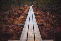 Ķemeri Bog Boardwalk | Latvia #359/365 (A. Aleksandravičius) Tags: ķemeri bog kemeru boardwalk latvia abstract nature walking trail explore nikon nikkor 50mm 50 365 365days 3652017 d750 nikond750 50mmf14g nikkor50mm nikon50mm14g f14g nikon50mm project365 359365
