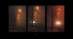 Fog and shadows (II) (ibethmuttis) Tags: landscape fog trees lights red car winter shadows evening road triptych