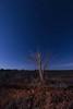 _OTR20262 (davidrr1) Tags: manganeses nocturna iluminación lightpainting linterna uda árboles