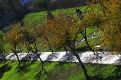 My town (88) (Polis Poliviou) Tags: nicosia lefkosia ledra street capital centre life live polispoliviou polis poliviou πολυσ πολυβιου cyprus cyprustheallyearroundisland cyprusinyourheart yearroundisland zypern republicofcyprus κύπροσ cipro кипър chypre chipir chipre кіпр kipras ciprus cypr кипар cypern kypr ©polispoliviou2017 oldcity europe building streetphotography urbanphotography urban heritage people mediterranean roads morning architecture buildings 2017 city town travel leaf leaves water winter christmas xmas christmasspirit christmasornaments nature