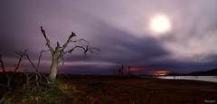 Nights moonlight (Peideluo) Tags: moon light night landscapenight tree dark hierba cielo campo árbol paisaje