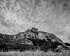 Bishop Peak (MBT Photography) Tags: bishoppeak canon175528is canon7dmarkii blackwhite sanluisobispo