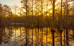 Sunrise (Jon Ariel) Tags: emanuelcounty ga georgia swamp georgelsmithstatepark cypress sunrise lake