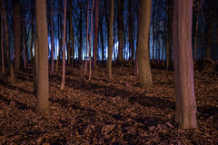 The light that was there by Markus Lehr - Happy new year to you all!  Hennigsdorf, Germany – 2017, November 29  website I facebook I instagram I publications & exhibitions  © 2018 Markus Lehr