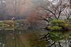Westlake 西湖 花港觀魚 (MelindaChan ^..^) Tags: hangzhou china 杭州 西湖 westlake willow leaf leaves plant tree 柳樹 chanmelmel mel melinda melindachan garden chinese water