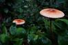 LOUCOMELO (Denys Jacauna) Tags: cogumelo parque estadual da pedra branca