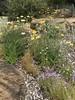 australian national botanic garden-13 (billdoyle[mobile]) Tags: australiannationalbotanicgarden act garden botanicgarden australia australiancapitalterritory anbg canberra australian billdoyle canberratripdec17jan18