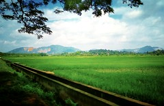 Kampung Belimbing Dalam - http://4sq.com/osKovC #green #nature #tree #grass #travel #holiday #holidayMalaysia #travelMalaysia #Asian #Malaysia #Malacca #大自然 #草 #树木 #旅行 #度假 #马来西亚旅行 #马来西亚度假 #亚洲 #马西亚 #发现马来西亚 #发现大马 #自游马来西亚 #马六甲 #花草树木 #天空 #sky #绿色