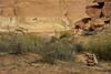 Horseshoe Shelter pictographs (Brandon Rasmussen) Tags: utah canyonlandsnationalpark horseshoecanyon nature hiking nikond7100 desert southwest americansouthwest nationalpark pictographs rockart