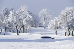 Winter Wonderland. (iancook95) Tags: