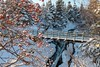 Snow in the Park (Karen_Chappell) Tags: bowringpark park nature stjohns snow bridge waterfordriver canada atlanticcanada avalonpeninsula eastcoast dogberries trees winter january newfoundland nfld river cold red white green landscape scenery scenic