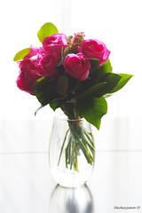 New Year's Bouquet (bluehazyjunem) Tags: rose flower bouquet vase home