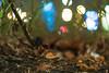Zenit Helios 44-3 58mm ƒ/2 (Зенит Гелиос 44-3) - DSCF3539 (::Lens a Lot::) Tags: zenit helios 443 58mm ƒ2 гелиос paris | зенит classic prime lens profondeur de champ effet fungus mushroom macro bois oiseau animal arbre flou bokeh depth field color night public light rose green yellow orange blue red pink purple vintage manual 2018 ciel