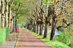 Woerden 2017 – Oostsingel (Michiel2005) Tags: oostsingel bomen trees tree boom woerden holland nederland netherlands