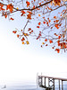 Infinity (ila.bona) Tags: autunno autumn colorfull landscape pontile lagodigarda ilabona minimal ila lazise leaves ilabona85 tree nature alone withoutborders quite colors trip relax infinito gardasee gardalake