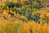 Autumn Foliage Bonanza (chasingthelight10) Tags: canyons landscapes travel events photography creeks forests foliage nature mountains places california bishopcreekcanyon easternsierranevada sierranevada bishopcreek northlake sabrinalake southlake