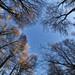Micheldever Wood, Hampshire
