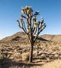 December Fun 2017 (Ashly Myrick- Crocker) Tags: saltonsea california cali ca desert beach december joshuatree joshua tree cactus sfmoma art museum sanfrancisco