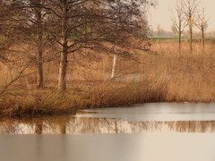 Reeds and ice (STEHOUWER AND RECIO) Tags: reed riet reeds shore ice lake ijs meer reflections reflecties brown nature bruin natuur netherlands nederland holland dutch gaatkensplas barendrecht tree trees boom bomen scenery view winter photo photography capture image